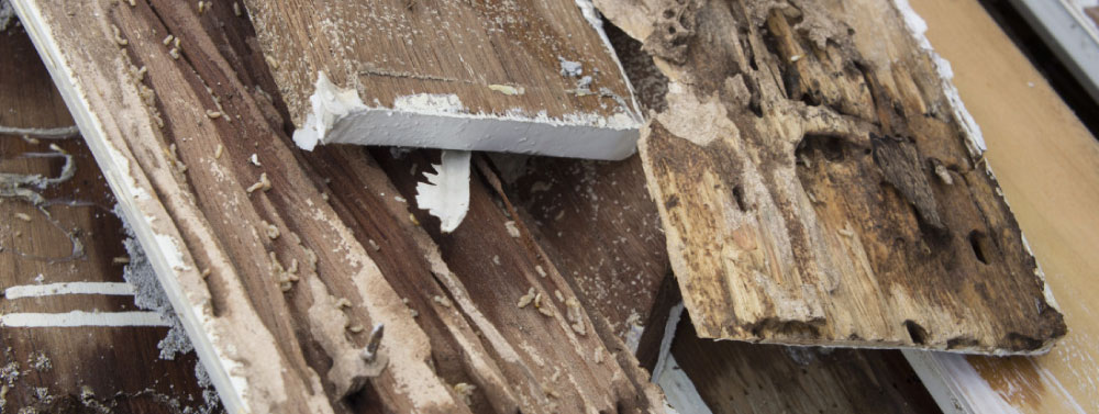 Brisbane Termite and Pest Inspections